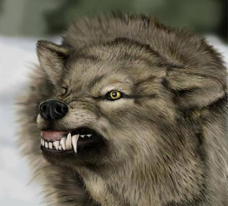 Angry_wolf