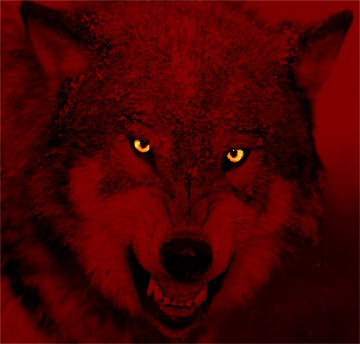 Red_wolf6